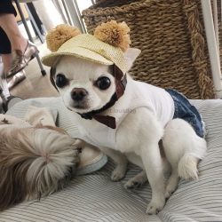 ВИП Дог, бутик для собак, купить одежду