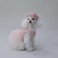 Одежда для собак на разные сезоны