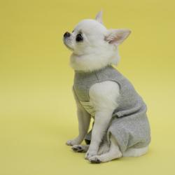 Подгузники для собаки: особенности и способы применения