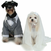 Свадебная и праздничная одежда (20)