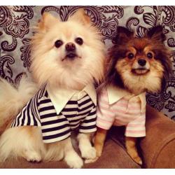 Одежда для собак в Москве - красота и необходимость