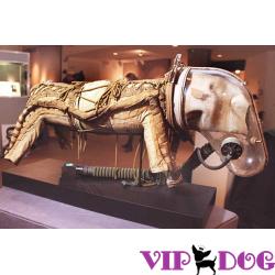 Собака - друг человека! Даже во Вьетнаме.