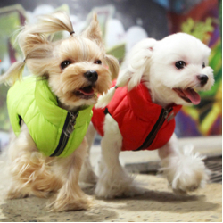 Puppy Angel – лучший выбор для лучших собак