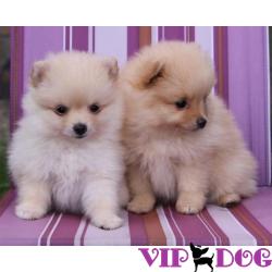 Гламурные породы собак
