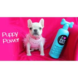 Косметика для собак: правильный выбор для безупречной шерсти