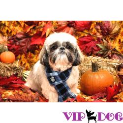 Осень: позаботьтесь о здоровье собаки!