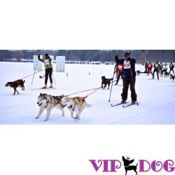 Спорт с собакой – активный и полезный отдых