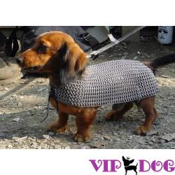 Одежда для собак: как всё начиналось