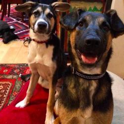 Бездомные собаки Сочи – одинаковые истории с разными концами