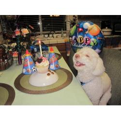 День Рождения собаки: как создать праздничную атмосферу