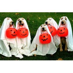Собаки и Хэллоуин: к празднику готовы!