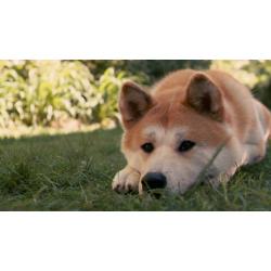 Народные приметы и поверья, связанные с собаками