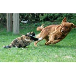Собаки и кошки – почему враждуют четвероногие?