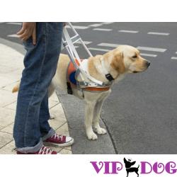 Собачьи профессии – каждому своё