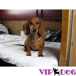 Проезд на поезде с собакой: не забудьте о новых правилах!
