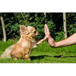 Какие команды должна знать каждая собака?