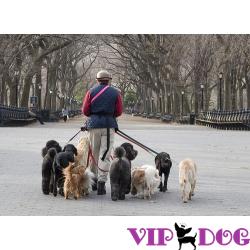 Выгул собак по правилам: что требует законодательство?