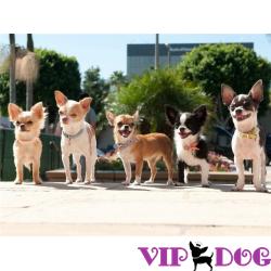 Одежда для собак в интернет магазине недорого