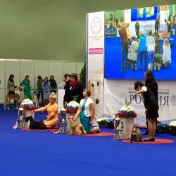 VIP-DOG.COM принял участие в XXI интернациональной выставке собак всех пород