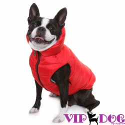 Одежда для собак: дань моде или необходимость?