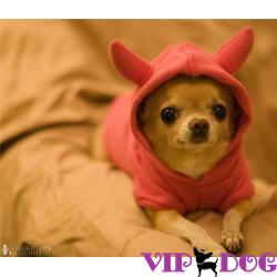 Интересуют лежанки для собак? Интернет магазин вам в помощь!