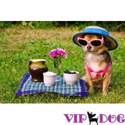 Ошибочные стереотипы о собаках мелких пород