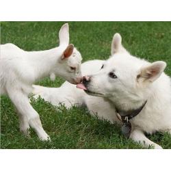 Необычная дружба между животными