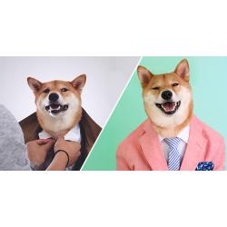 Домашняя кроха или собака звезда?