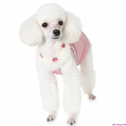 Гардероб для собаки: необходимость или дань моде?