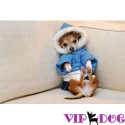 Ошейник для собак для дрессировки и его особенности