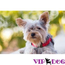 Ошейник с навигатором для собак: питомцу – безопасность, хозяину – покой