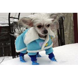 Зимняя одежда для собак в интернет магазине.