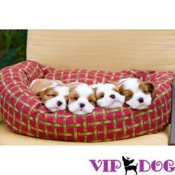 Выбираем спальное место для щенка