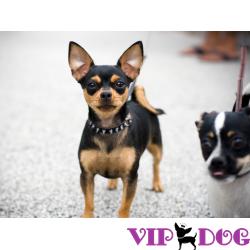 Влияние питания собаки на состояние ее шерсти и кожи