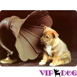 Музыка для собак: какая подойдет?