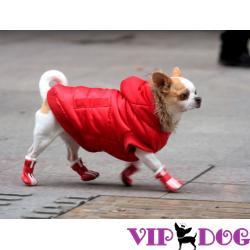 Почему многие хозяева собак обувают своих животных?