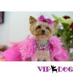 Как собаку приучить платья разные носить…