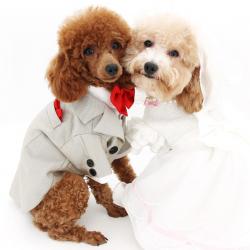 Одежда для собак – лучший подарок для питомца