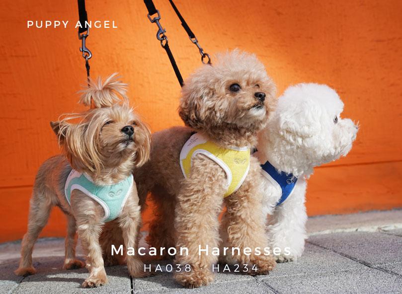 одежда для йорка купить Puppy Angel
